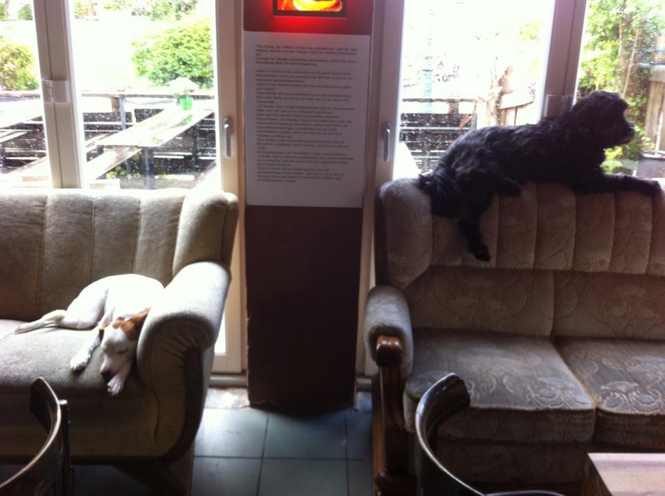 Hundeliebhabercafe